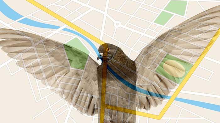 pigeon update focust op lokale zoekmachineresultaten
